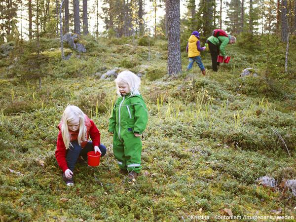 森の恵み、ブルーベリー摘み